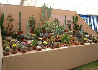 Cactus-display-Hort-2006