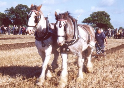 ploughing-horses-1-brailsford-2000