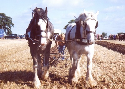 ploughing-horses-2-brailsford-2000