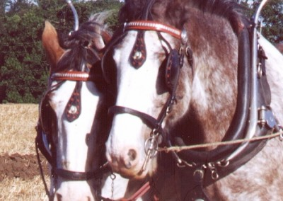 ploughing-horses-3-brailsford-2000