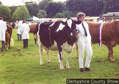 GRAND-PARADE-FRIESIAN-COW-MAY-2000
