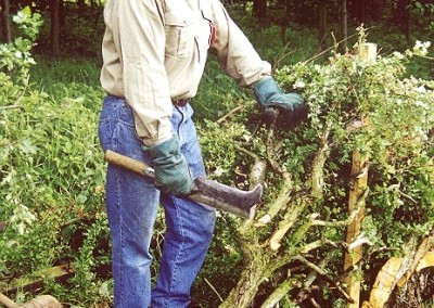 HEDGE-LAYING-MAY-2000