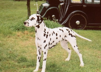 TUMBRIL-TEXASROSE-DALMATION-MRS-CA-FABIAN-BIS-2000