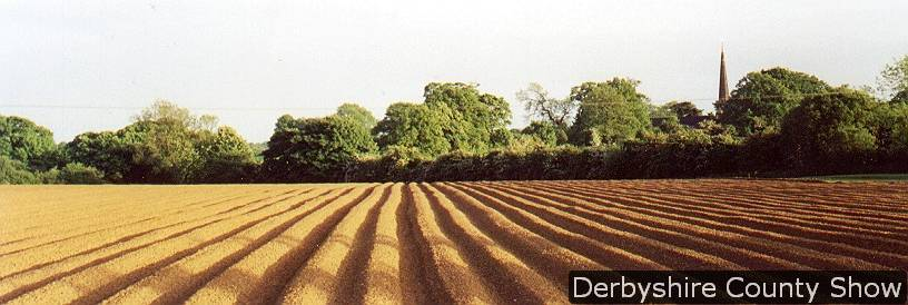 furrows-at-morley-summer-1998