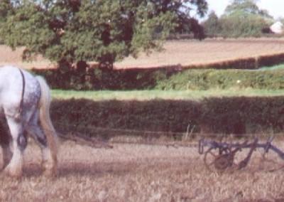 ploughing-horses-4-brailsford-2000